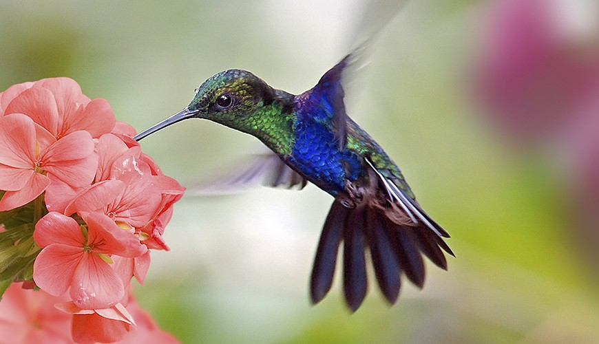 Fly High with Hummingbird